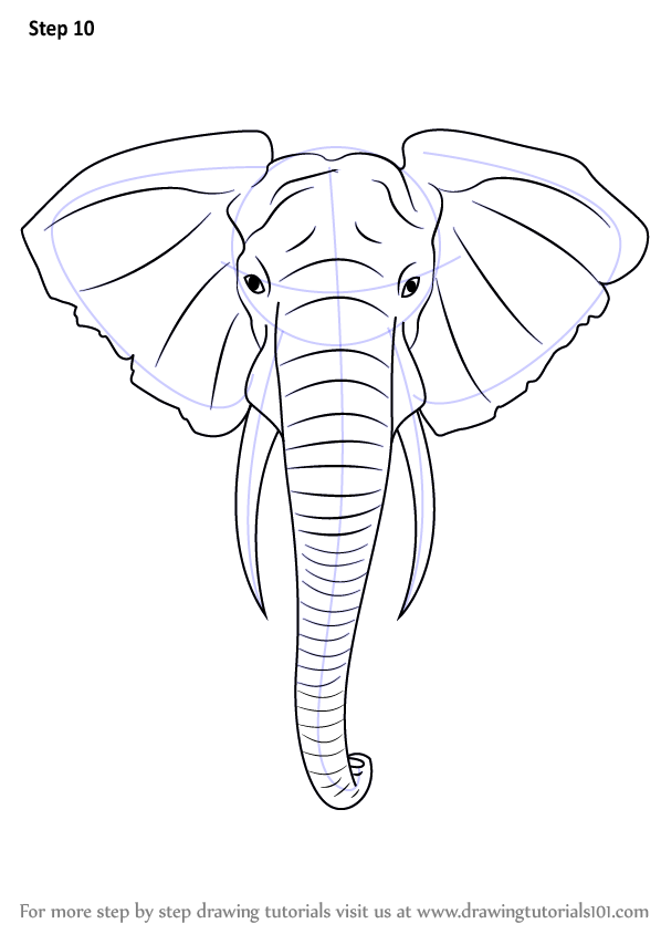 598x844 Learn How to Draw an Elephant Head (Zoo Animals) Step by Step