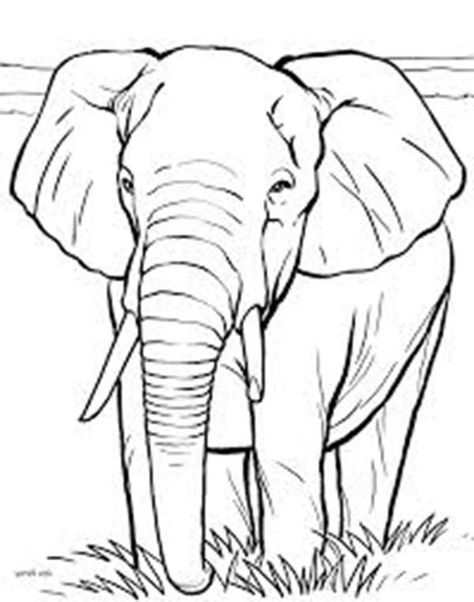 474x602 African Elephant Coloring Page color me Pinterest African