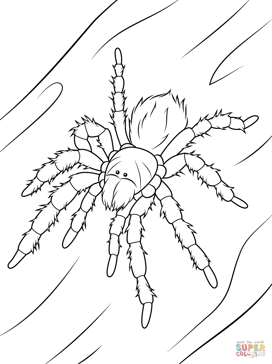 894x1199 Adult Tarantula Coloring Pages Tarantula Coloring Pages. Tarantula