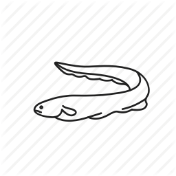 256x256 Anguilliformes, Eel, Electric Eel, Elongated Fish, Fish, Sea Snake