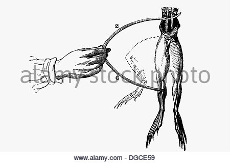 450x320 Galvani Frog Experiment, 1780 Stock Photo 135042736