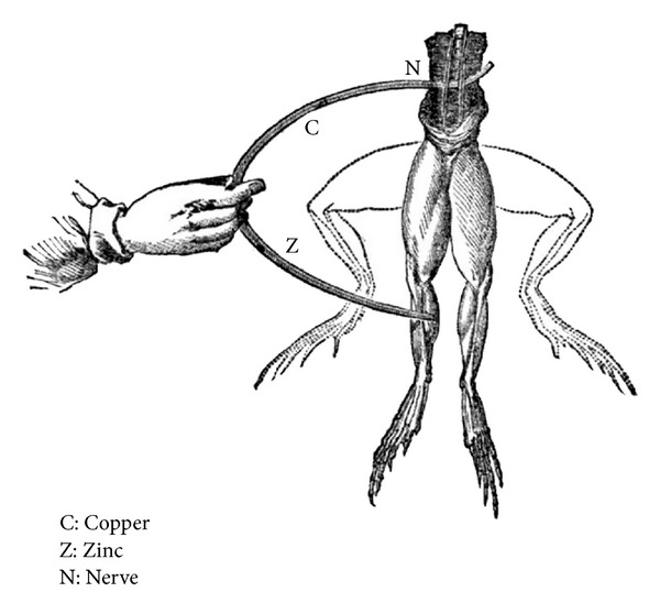 600x558 Electrical Stimulation Of A Frog Nerve. It Was Found That