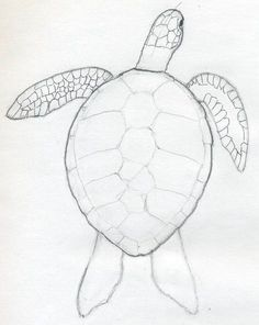 236x296 Learn How To Draw A Sea Turtle Using These Easy Instructions