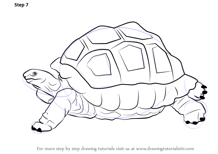 842x596 Learn How To Draw A Tortoise (Zoo Animals) Step By Step Drawing