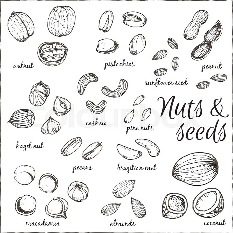 800x799 Nuts Collection Drawings. Sketches. Hand Drawing. Vector