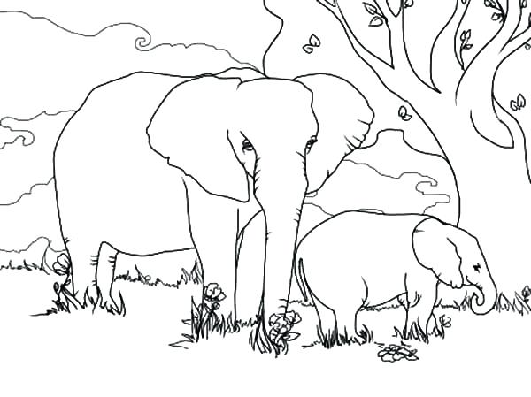 600x449 Elephant And Baby Under The Tree Coloring Pages Sheets For Murs