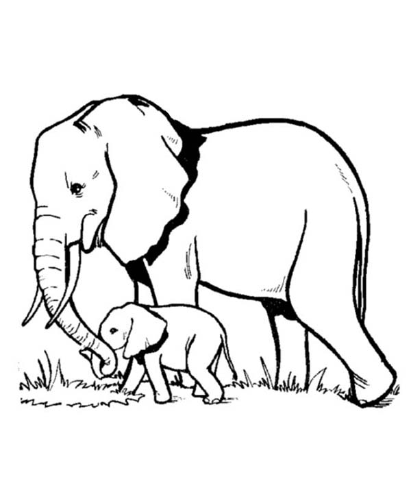600x734 Elephant And Baby Elephant Looking For Fresh Grass Coloring Page