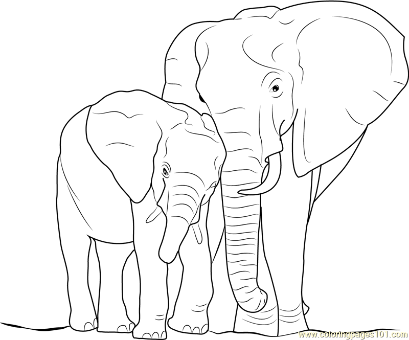 800x665 Elephant With Baby Coloring Page