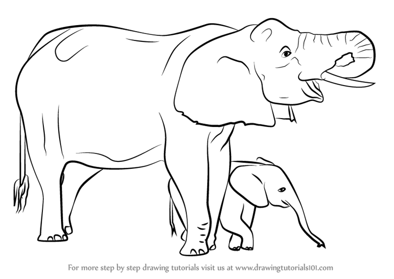 800x567 Learn How To Draw An Elephant Mother And Baby (Other Animals) Step
