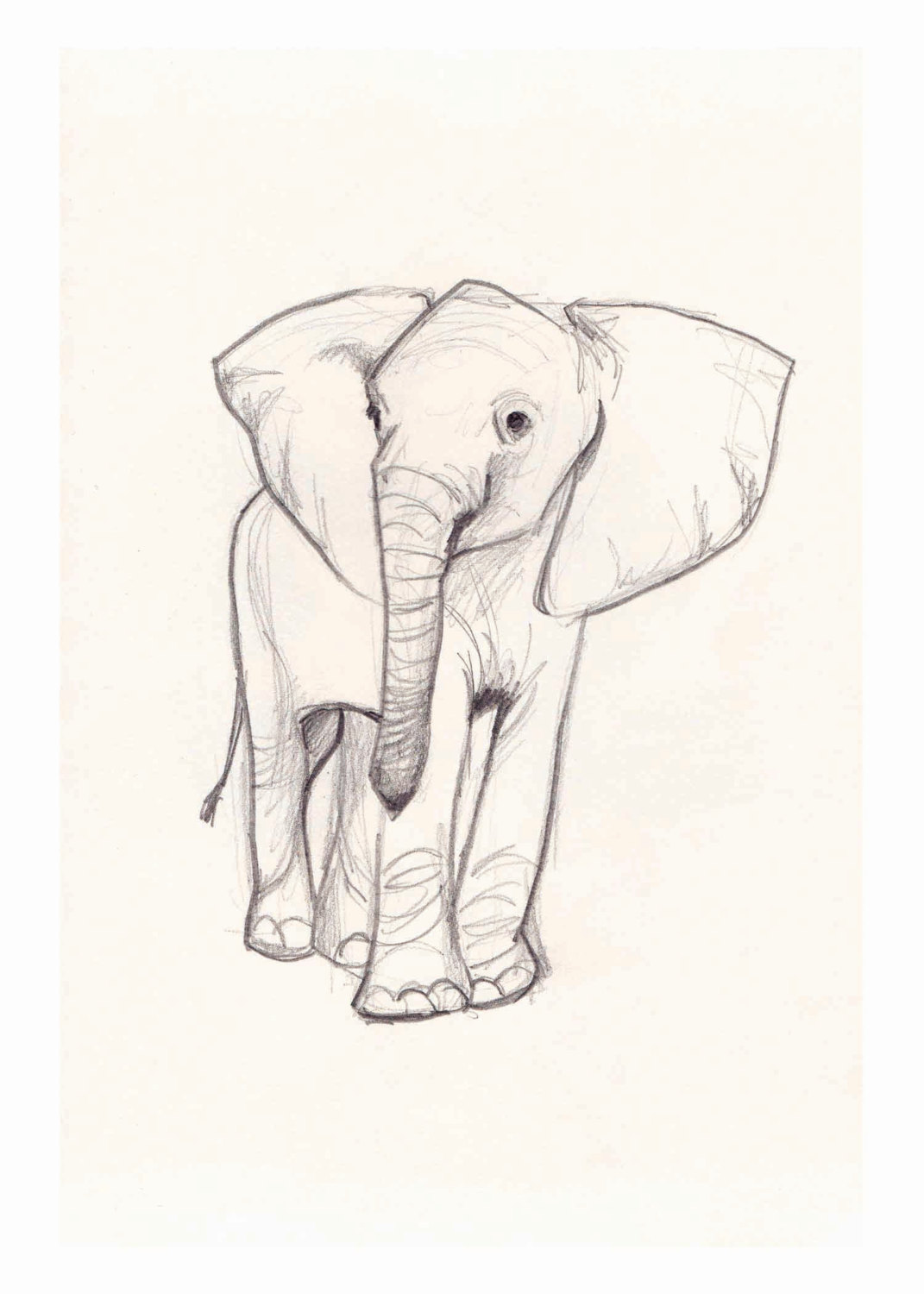 1071x1500 Modest How To Draw A Baby Elephant 12