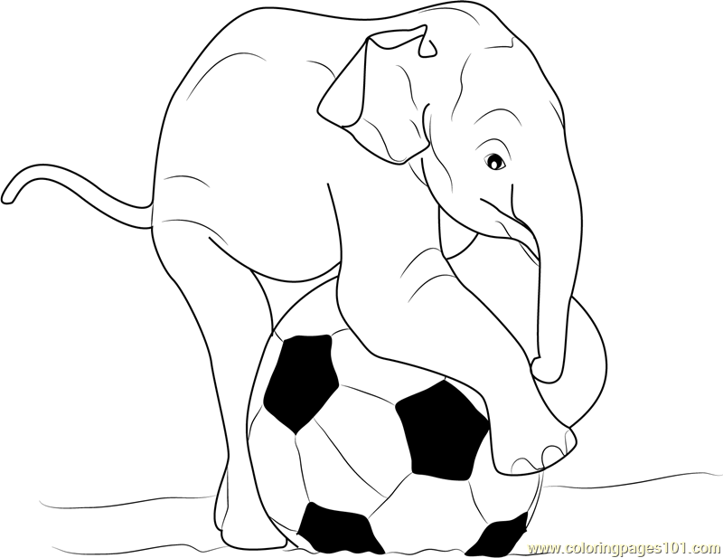 800x617 Baby Elephant Playing Ball Coloring Page