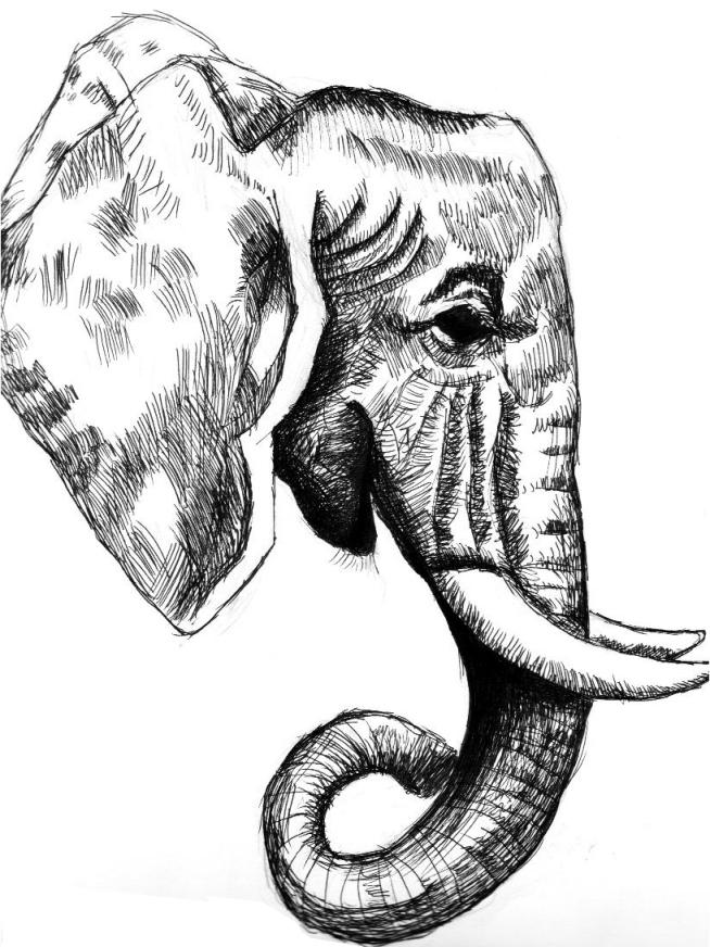 654x872 Elephant Head Study By Toxic Sin