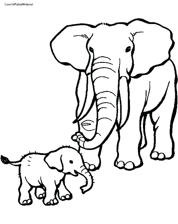 600x756 Elephant Coloring Page Baby Elephant Coloring Page Download