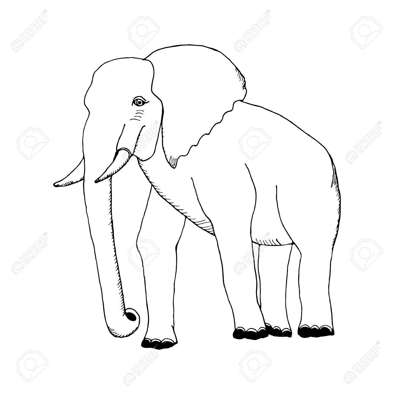1300x1300 Hand Draw A Sketch In The Style Of An Elephant On A Black White