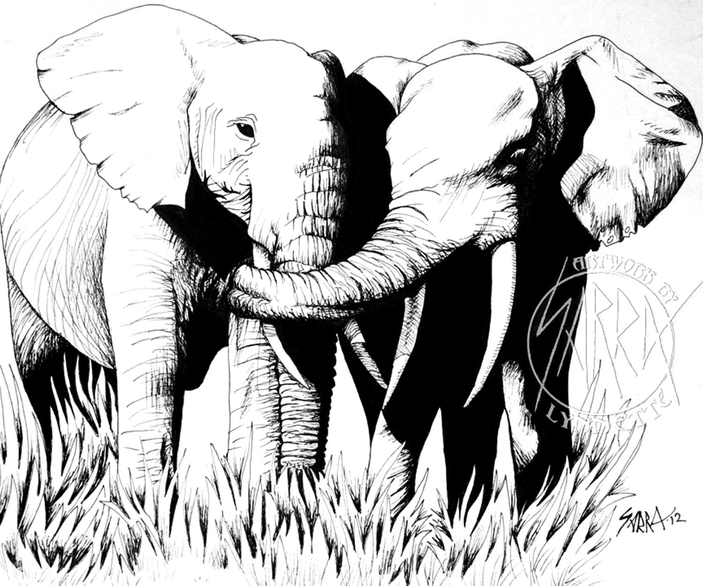 1500x1250 Pen Drawing Art Of Elephants Hugging By Sarra Lynnette Artwork