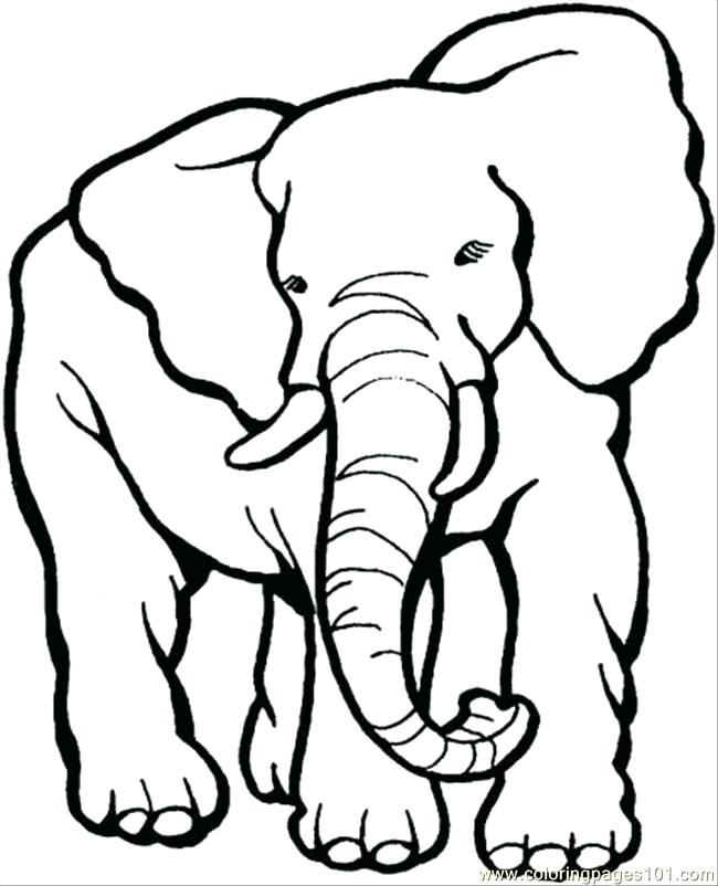 650x802 Elephants To Color Excellent Elephant Coloring Pages Colorings
