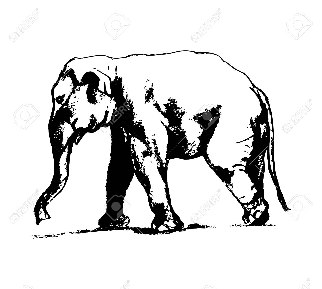 1300x1170 Graphic Design Ofn Elephant. The Image Ofn Elephant On
