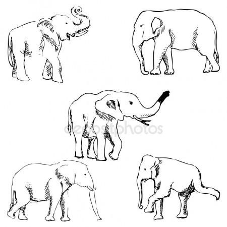 450x450 Elephants. A Sketch By Hand. Pencil Drawing Stock Vector