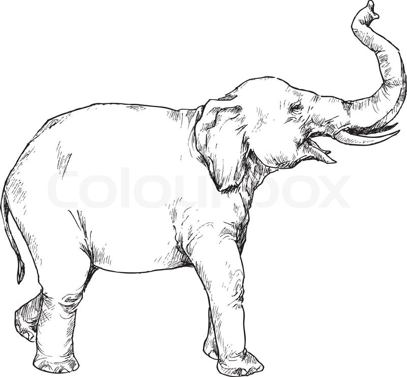 800x741 Hand drawn elephant Stock Vector Colourbox
