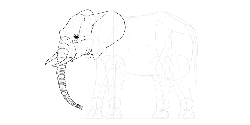 850x425 How to Draw an Elephant Step by Step