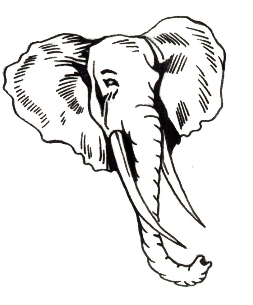 814x981 Simple Drawing Of An Elephant Images For Head Profile Outline
