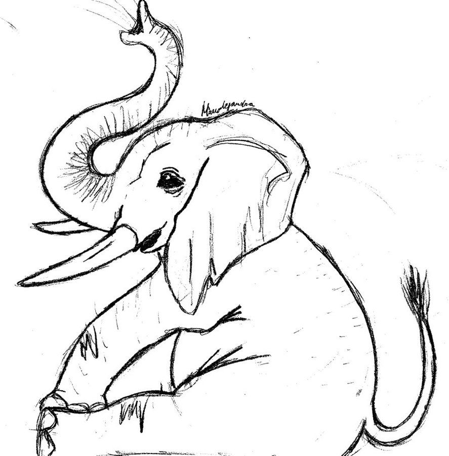 887x901 Coloring How To Draw A Cute Elephant Dragoart With How To Draw A