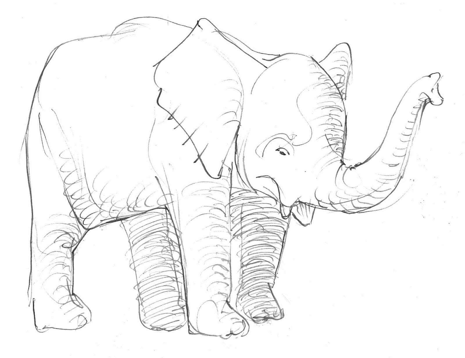 1600x1231 Elephant Drawings Drawing Pics