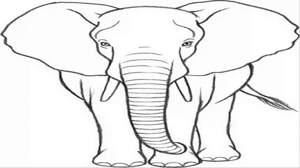 974x548 Coloring Pages Elephant Drawing Image Elephant Image Line