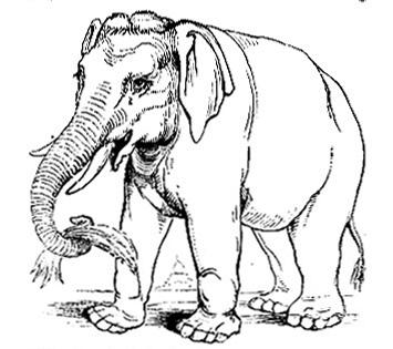 355x315 Elephant Drawings