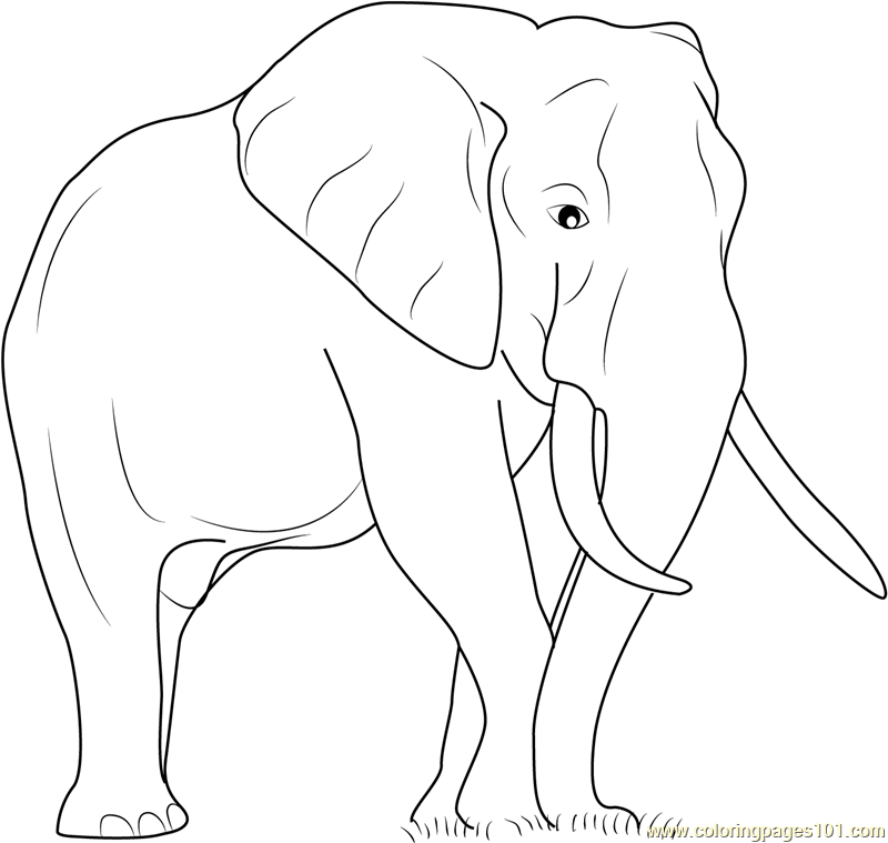800x759 Elephant The Big Animal Coloring Page