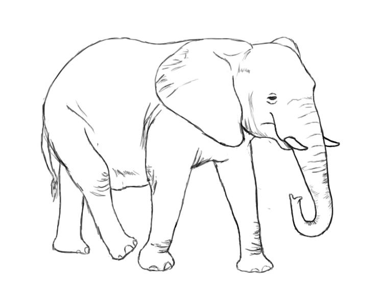 750x562 How To Draw An Elephant
