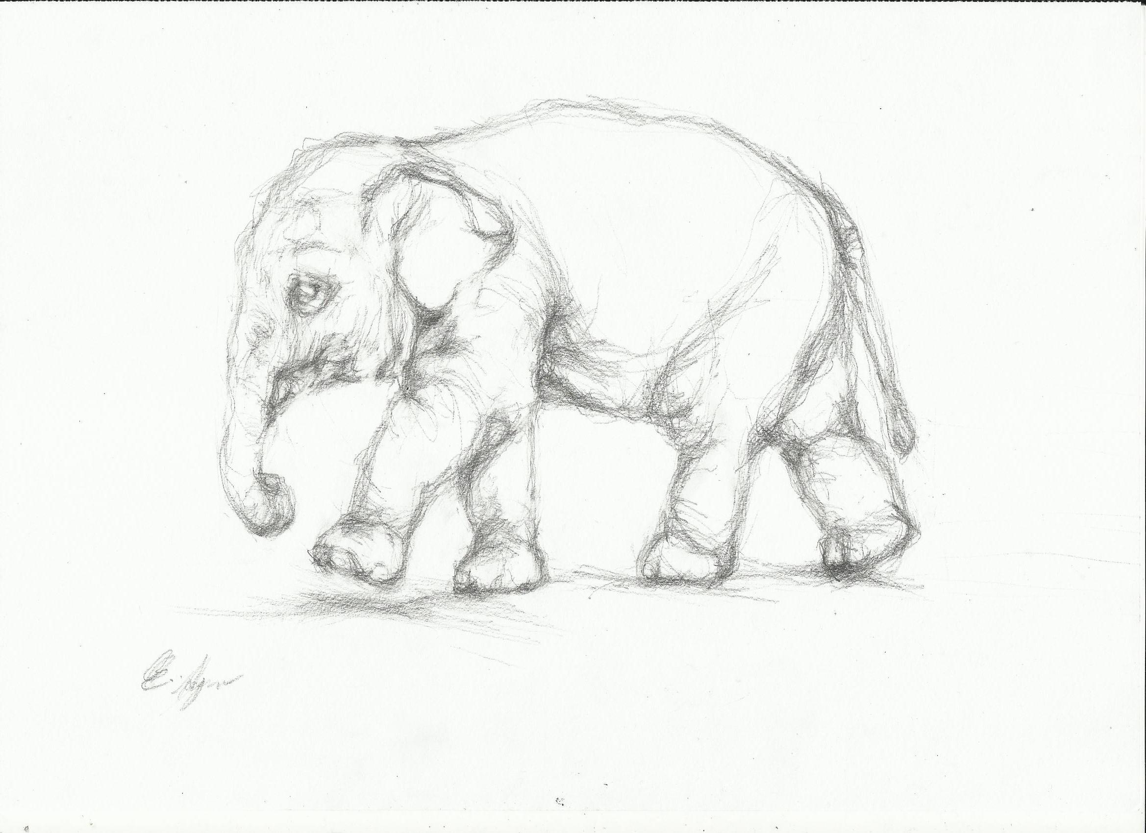 2338x1700 Elephant Sketch Nightwithdeer