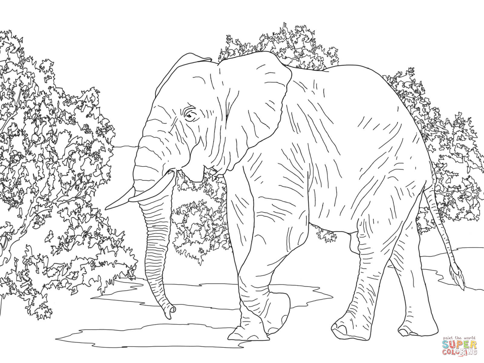 1600x1200 African Forest Elephant Walking Coloring Page Free Printable