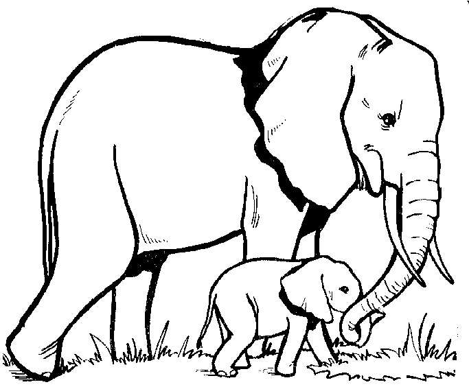 Professional Cartoon Elephant Outline Pin On Pinterest Tattoo Outlines