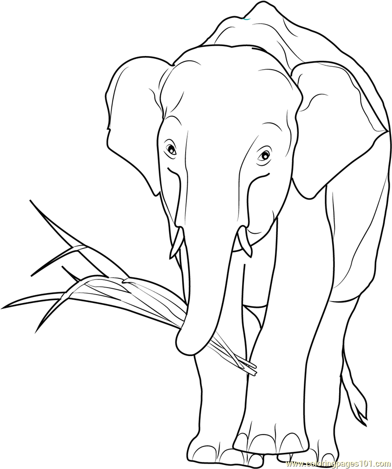 800x955 African Elephant Eating Coloring Page