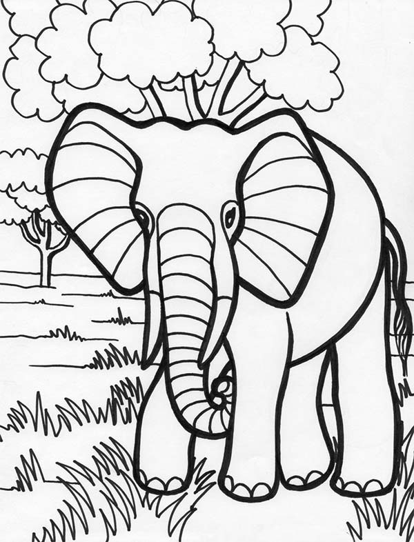 600x786 Elephant In The Jungle Coloring Page