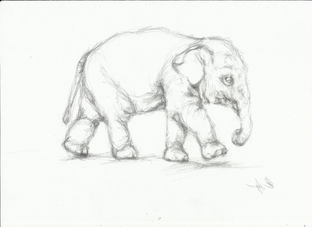 1024x744 Elephant Pencil Drawing Pencil Drawing Elephant Pencil Sketch