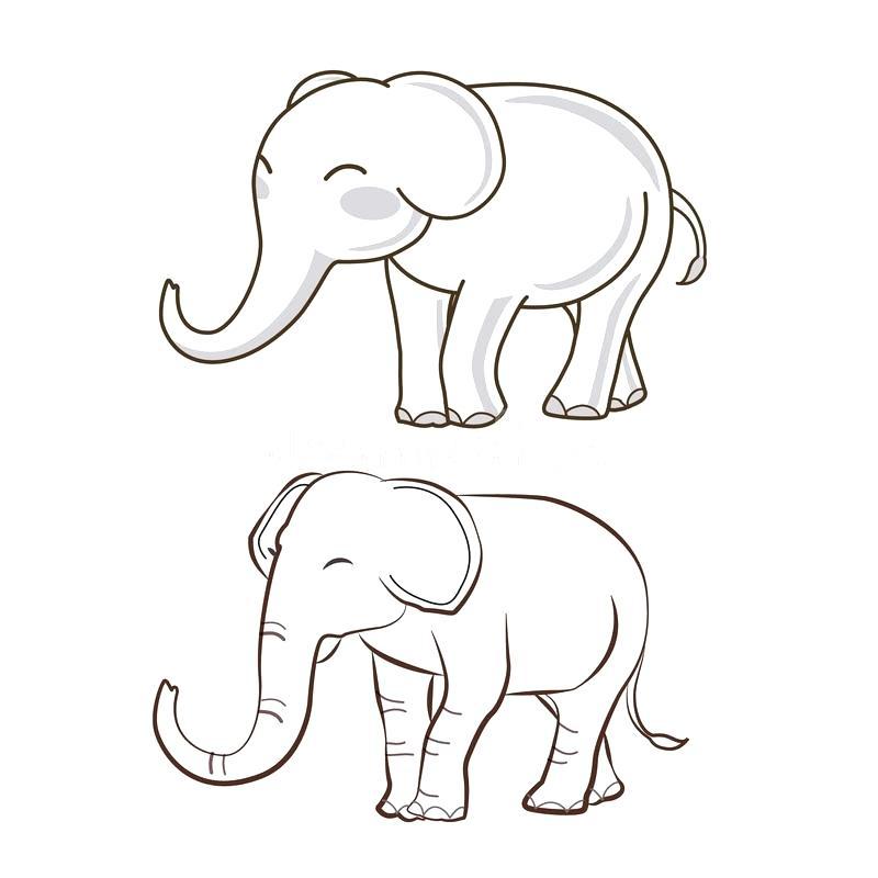 800x800 Elephant Drawing Outline Simple Elephant Template Baby Elephant