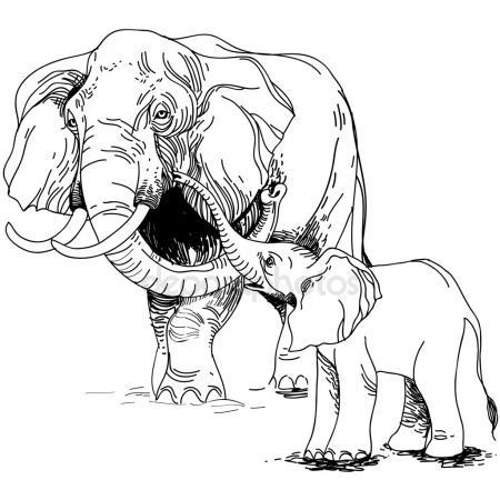 450x450 Baby Elephant Trunk Stock Vectors, Royalty Free Baby Elephant