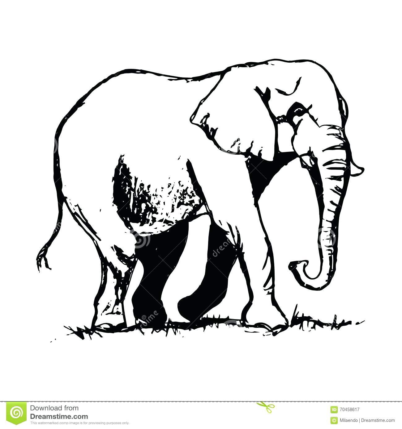 1300x1390 Decorative Outline Elephant Stock Vector 80 Interesting Trunk Up