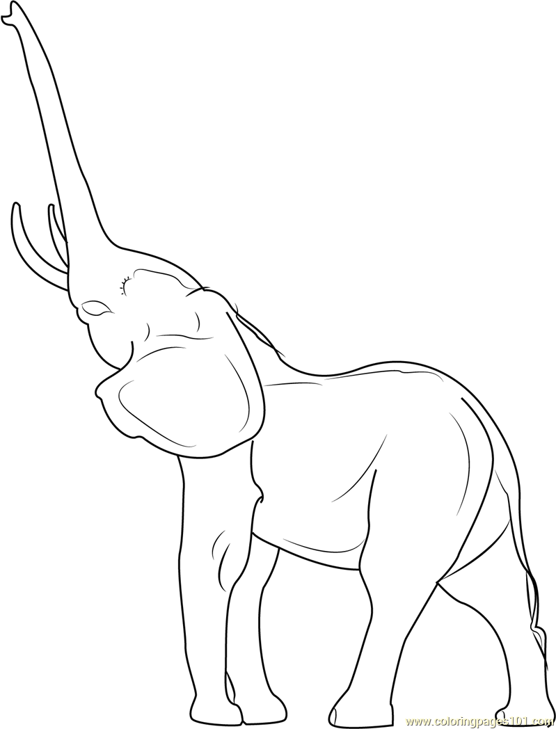 799x1048 Elephant Coloring Pages