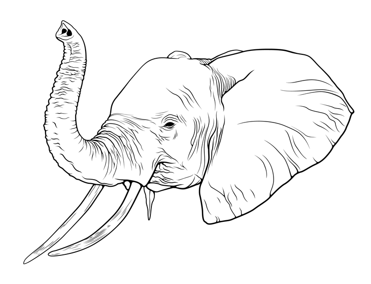 Elephant Drawing Trunk Up at GetDrawings | Free download