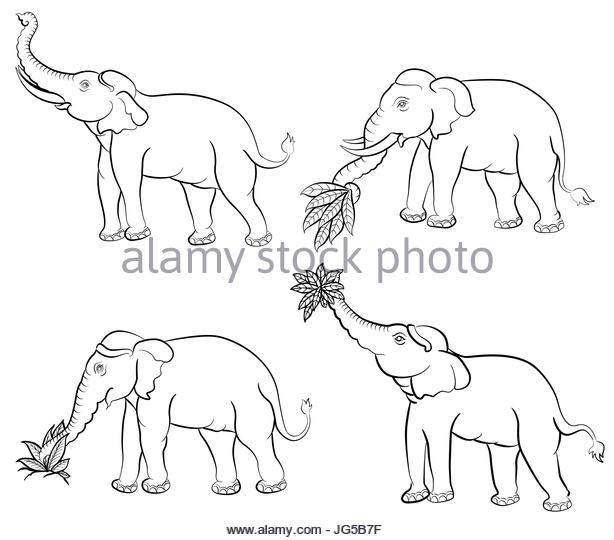614x540 Elephant Trunk Stock Vector Images