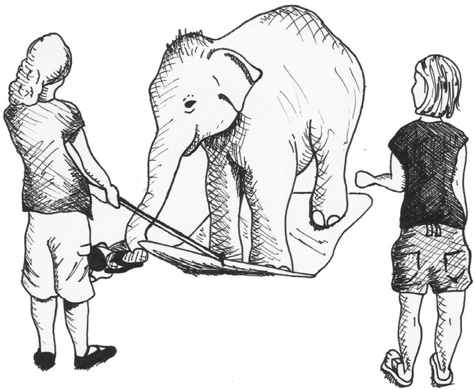 685x563 Elephants Know When Their Bodiesre Obstacles To Success In