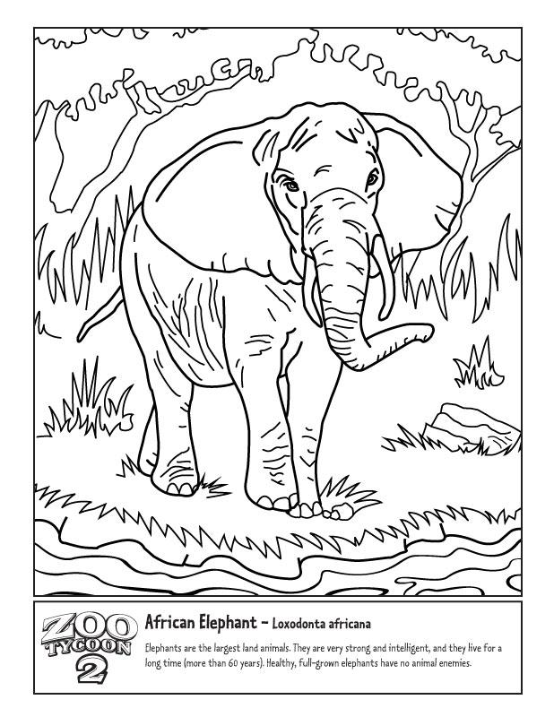 618x800 African Elephant Zoo Tycoon Wiki Fandom Powered By Wikia