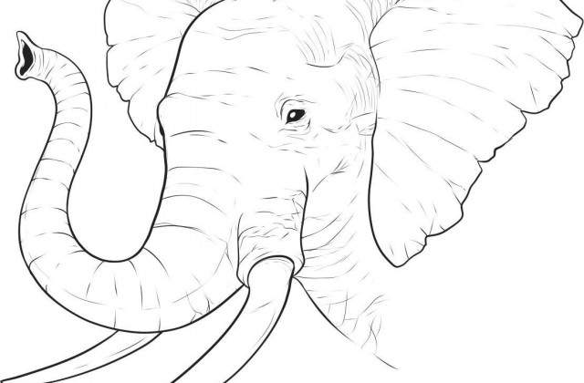 640x420 Tag For Elephant Easy Drawing Learn How To Draw A Baby Elephant