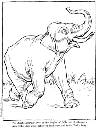 403x522 Zoo Animals Coloring Page Elephant