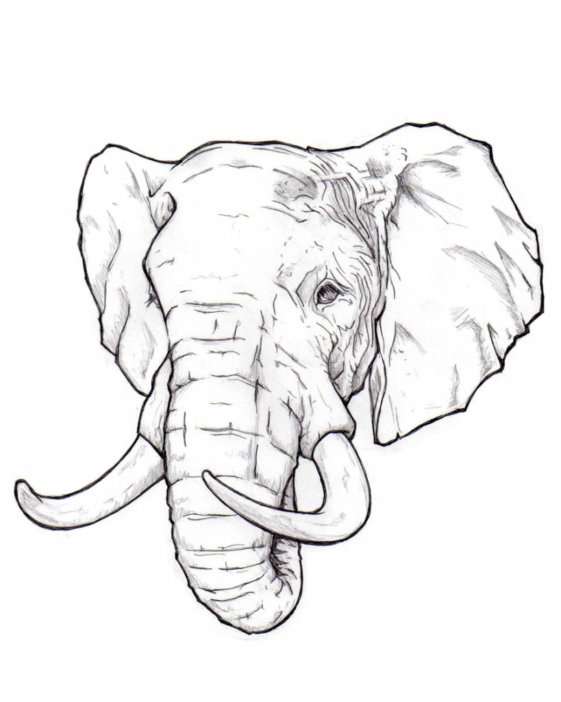 819x1024 Realistic Elephant Drawing