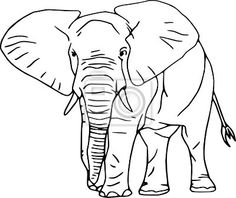 236x198 Step By Step How To Draw An Elephant Head. Art It All Out