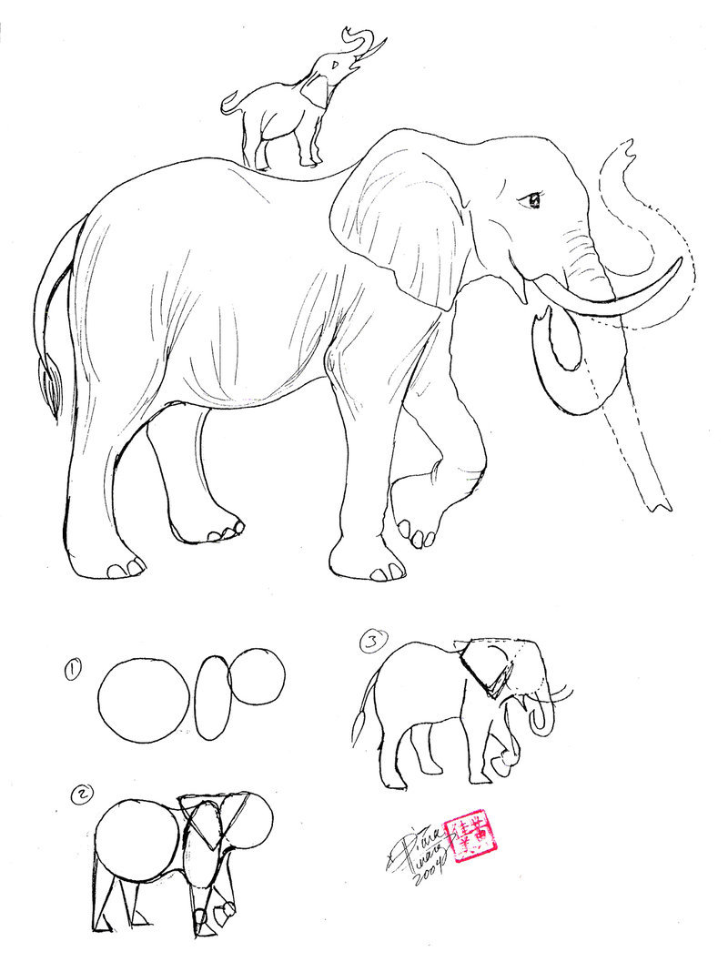 800x1068 Draw An Elephant By Diana Huang